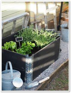 Terrarium, Have Fun, Cottage, Camping, Gardening, Plants, Outdoor, Home Decor, Vegetable Garden