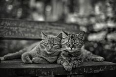 Love by alexander kan on 500px