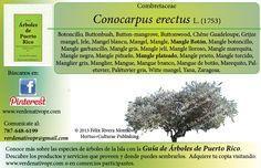 Redescubre el Mangle boton... con la Guía de Árboles de Puerto Rico www.verdenativopr.com