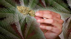 Medical Marijuana Supporters In Florida ClaimVictory