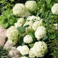 Buxus, Flora, Vegetables, Outdoor, Gardening, Bouquets, Pretty, Gardens, Landscaping