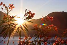 rays of happiness Personal Portfolio, Lake Como, Happiness, Child, Italy, Happy, Nature, Flowers, Plants