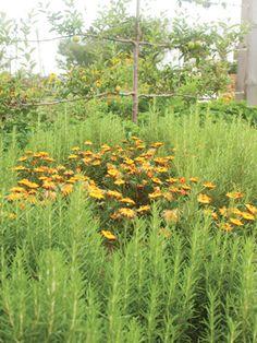P. Allen Smith: Flowers & Vegetables - AY Magazine - May 2015 - Arkansas
