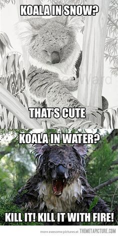 Koala in snow? Koala in water? Too funny! Haha Funny, Funny Cute, Funny Memes, Jokes, Funny Stuff, Scary Funny, Scary Scary, That's Hilarious, Funny Tweets