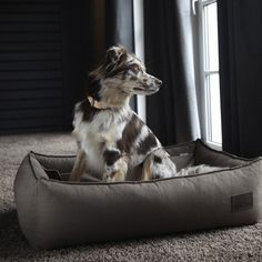 Modern Dog Beds, Bowls, Collars, and Leads by MiaCara - www.dogghaus.co.uk