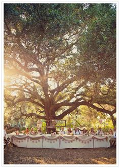 outdoor forest reception