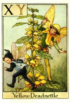 Alphabet Fairies:  Yellow Deadnettle by Cicely Mary Barker