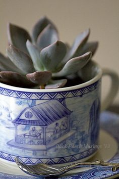 Teacup planted with succulent.