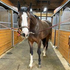 Spring Fever, Equestrian, Lifestyle, Hair, Instagram, Horseback Riding, Show Jumping, Strengthen Hair, Equestrian Problems