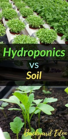 Hydroponics vs Soil | Hydroponics | DIY Hydroponics | Hydroponics for beginners | Indoor Hydroponics | Hydroponic Wall | Hydroponic System | Hydroponic Gardening | Homemade Hydroponic systems | Hydroponic Nutrients | Kratky Hydroponics | Greenhouse Hydroponics | Hydroponics Design | Hydroponic Vegetables | Backyard-Eden.com #hydroponicsdiy #hydroponicgardeningbackyards #indoorvegetablegardeningwall #hydroponicshomemade #indoorvegetablegardeninghydroponics #kratkyhydroponics