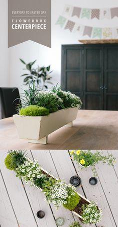 Create a flower box centerpiece for spring with an easy  Easter-theme transition. Mondo Grass, Echeveria, Jade, Snow Princess, Scotch Moss
