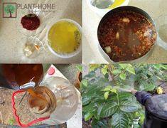 Yaprak Biti ve Kırmızı Örümcek Doğal ilaç | Plant-Home