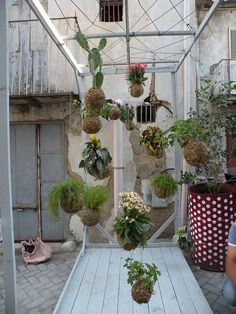 String Garden, Succulents and Traditional ...
