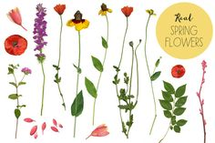 Check out Real Flower Clip Art & Flower Frames by Angie Makes on Creative Market