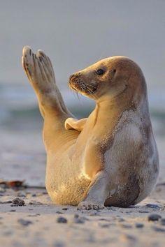 Yoga masters of the animal world