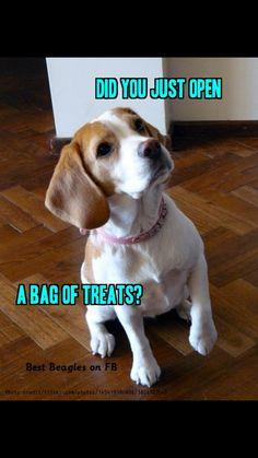 Oh beagles                                                                                                                                                      Más