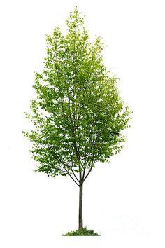523 件のおすすめ画像(ボード「tree Png」)【2019】 フォトモンタージュ、造園、景観設計