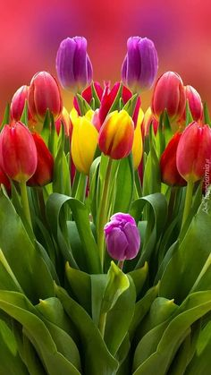 New flowers tulips favorite things ideas Tulips Garden, Tulips Flowers, Flowers Nature, Exotic Flowers, Amazing Flowers, Fresh Flowers, Colorful Flowers, Spring Flowers, Planting Flowers