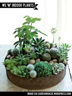 cacti garden in an old cake tin!