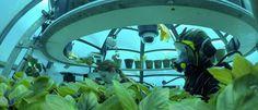 Nemo's+Garden:+Conheça+a+horta+que+está+crescendo+sob+o+mar