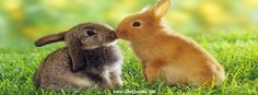 Beautiful rabbits on the Grass for facebook cover from thequotes.net