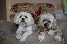 My babies...Serena & Bentley