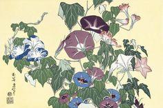 北斎の朝顔に雨蛙の花の浮世絵の下絵、画像