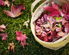 Gardening 101: How to Use Fallen Leaves l Gardenista Everybody knows that the absolute best use for fallen leaves is to rake them into a high, crunchy pile in the middle of the lawn and then jump in. Second best? Use fallen leaves as mulch. Here's how:  Photographs by John Merkl for Gardenista.