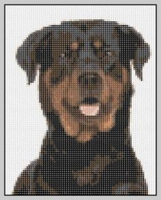 Free Rottweiler Dog Cross Stitch Pattern