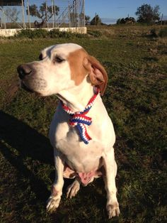 USA dog collar, Dog Necklace, Dog Collar Crochet, Red White and Blue Dog Collar with stripes   Patriotic dog collar for the Fourth of July, Veterans