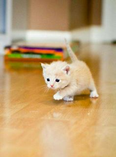 That's a determined kitten!