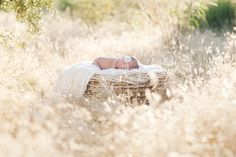 Am I the only person in the world who doesn't get newborn photography? I mean, in a studio, yeah, I sort of get it, but I still find it creepy. This picture exemplifies the freaking strangeness of baby photography even more. It's a baby, in a basket, in a field! It's so freaking unnatural. It looks like a photographer was out on a stroll in the back field and stumbled upon a baby lying on a basket, fast asleep. Oh yeah, and the baby has a flower tucked in it's ear. Come on. That looks…