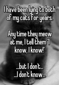 I say that to the cat all the time...