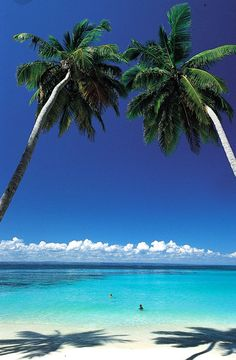 the beach, ocean, palm trees...