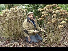 COMMENT TAILLER UN HORTENSIA ADULTE Hydrangea Macrophylla, Hortensia Hydrangea, Blog, Garden, Youtube, Recherche Google, Nature, Hydrangea Garden, Garden Care