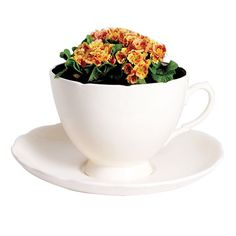 89 best Cup & Saucer Planter images on Pinterest   Planters, Window ...