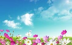 Grass Sky Wallpaper Free Download