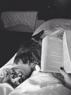 Gatito disfrutando de la lectura
