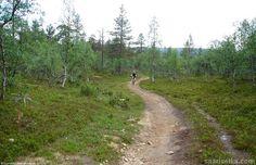 Mountain biking (4) | Saariselkä, Kona Shop Saariselkä: Rent or buy a bike and excursions from www.saariselka.com/kona.shop #mtb #mountainbiking #maastopyoraily #maastopyöräily #saariselkämtb #saariselkä #saariselka #saariselankeskusvaraamo #saariselkabooking #astueramaahan #stepintothewilderness #lapland