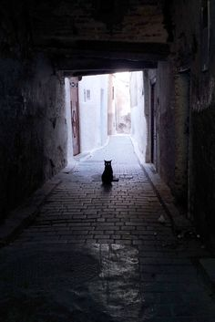 Alley Cat by Simon Griffiths