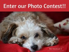 Could you use an extra $100 cash?  Enter our December contest and win big!  See our blog for the scoop!