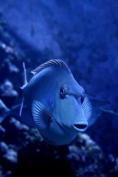 Fish under the sea. Underwater Creatures, Ocean Creatures, Underwater Life, Image Bleu, Pale Dogwood, Photo Bleu, Deep Blue Sea, Beautiful Fish, Mundo Animal