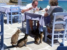 Couple at a seaside taverna surrounded with cats. Paros Island, Greece Travel, Seaside, Greek, Lunch, Cats, Animals, Couple, Photography
