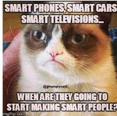 Grumpy Cat HAHAHAHAHA!!!!