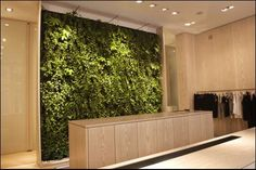 Indoor Plantwall Puts Bloggers Back in Touch with Nature