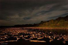 Caiman Night.jpg