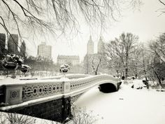 Bridge Central Park Snowy (Vivienne Gucwa)