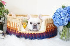 Design Dua Dog Bed by DesignDua on Etsy Dog House Bed, Dog Bed, Cat Having Kittens, Paws And Claws, Pet Beds, Pug Life, Dog Gifts, Dog Owners, Dog Tags