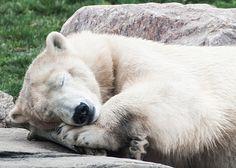 Sweet Dreams. Photo by SleepingBear