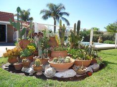 Cactus garden display- Garden designs by milena oitana. Tropical Landscaping, Tropical Garden, Front Yard Landscaping, Landscaping Ideas, Backyard Ideas, Outdoor Plants, Outdoor Gardens, Rock Garden Design, Dry Garden